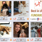 Paws for thought and raise money while you're at it